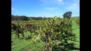 B.R. Cohn Winery -  Sonoma California