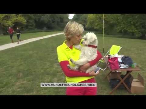 Team Hundeglück Im Wiener Prater Am 1192017 Beitrag Auf Wien24