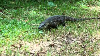 An Afternoon At Cedar Creek Falls Gold Coast Queensland Roaming Goannas