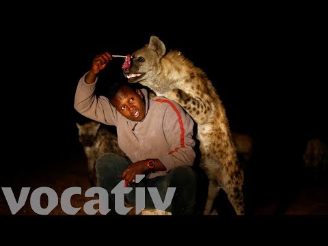 Would You Feed A Hyena From Your Mouth?