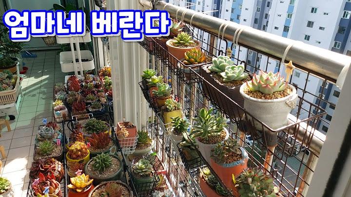 엄마네 베란다 ! 다육이페이로 뭐가 왔나 보러 왔어요~^^ 같은 이름 다른 얼굴 흑장미 구경해요 !  多肉植物, Korean succulents