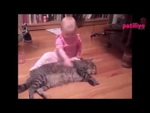 Komik Kedi Videoları