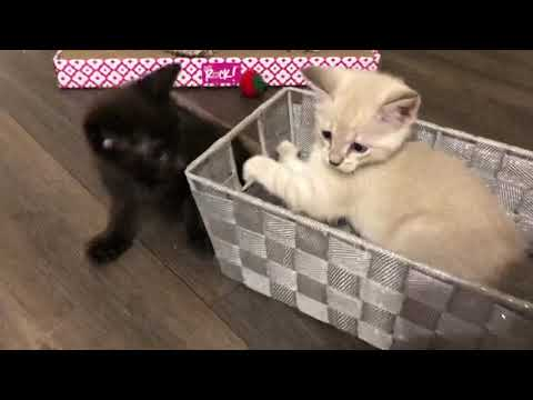 Kittens Playing in a Basket!