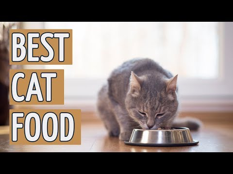 ⭐️ Best Cat Food: TOP 15 Cat Foods of 2018 ⭐️