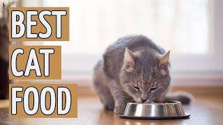 ⭐️ Best Cat Food: TOP 15 Cat Foods of 2018 ⭐️