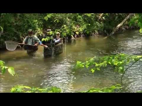 Cmos kids fly fishing in north ga youtube for Fly fishing north georgia
