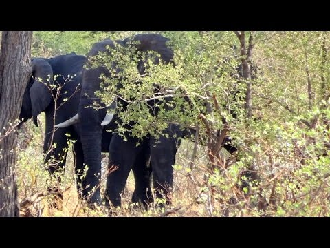 Why protecting elephant in Malawi's forest is not for the faint hearted