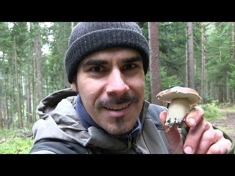 02 | Pilze des Waldes: Der Steinpilz