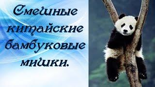 Приколы животных Как игрушечные смешные  китайские бамбуковые мишки.