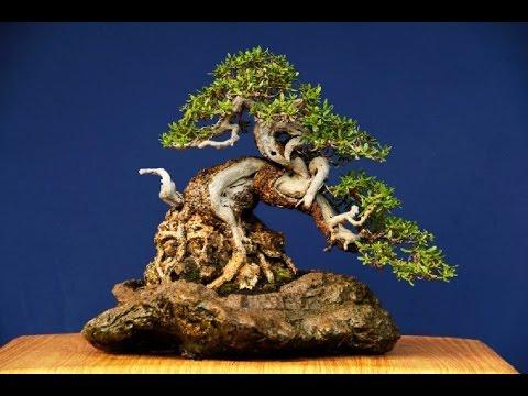 Create A Driftwood Bonsai Youtube