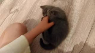когда васька кусается кошка и котята