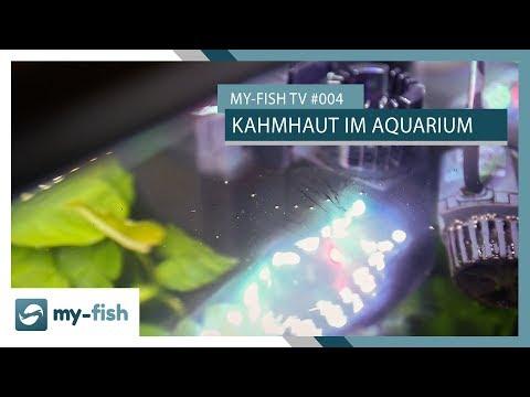 Die Kahmhaut - Schmutzfilm auf der Wasseroberfläche? | my-fish TV