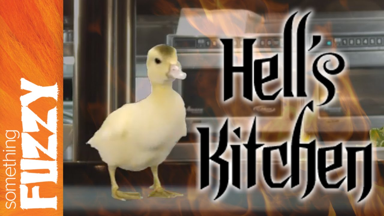 Duck 39 S Kitchen Funny Gordon Ramsay Is Angry Hell 39 S Kitchen New Season Preview Youtube