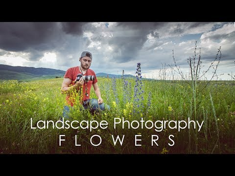 Tips for Photographing Summer Flowers   Landscape Photography