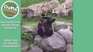 Ultimate Cincinnati Zoo Gorilla Vine Compilation