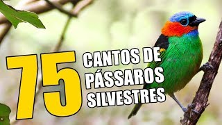 75 SONGS OF BIRDS