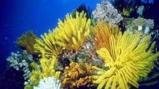 Biomes: Marine