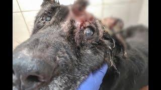 Взгляд этой собаки пронзает сердце и душу Мы чувствуем всю его боль, горечь  и отчаяние
