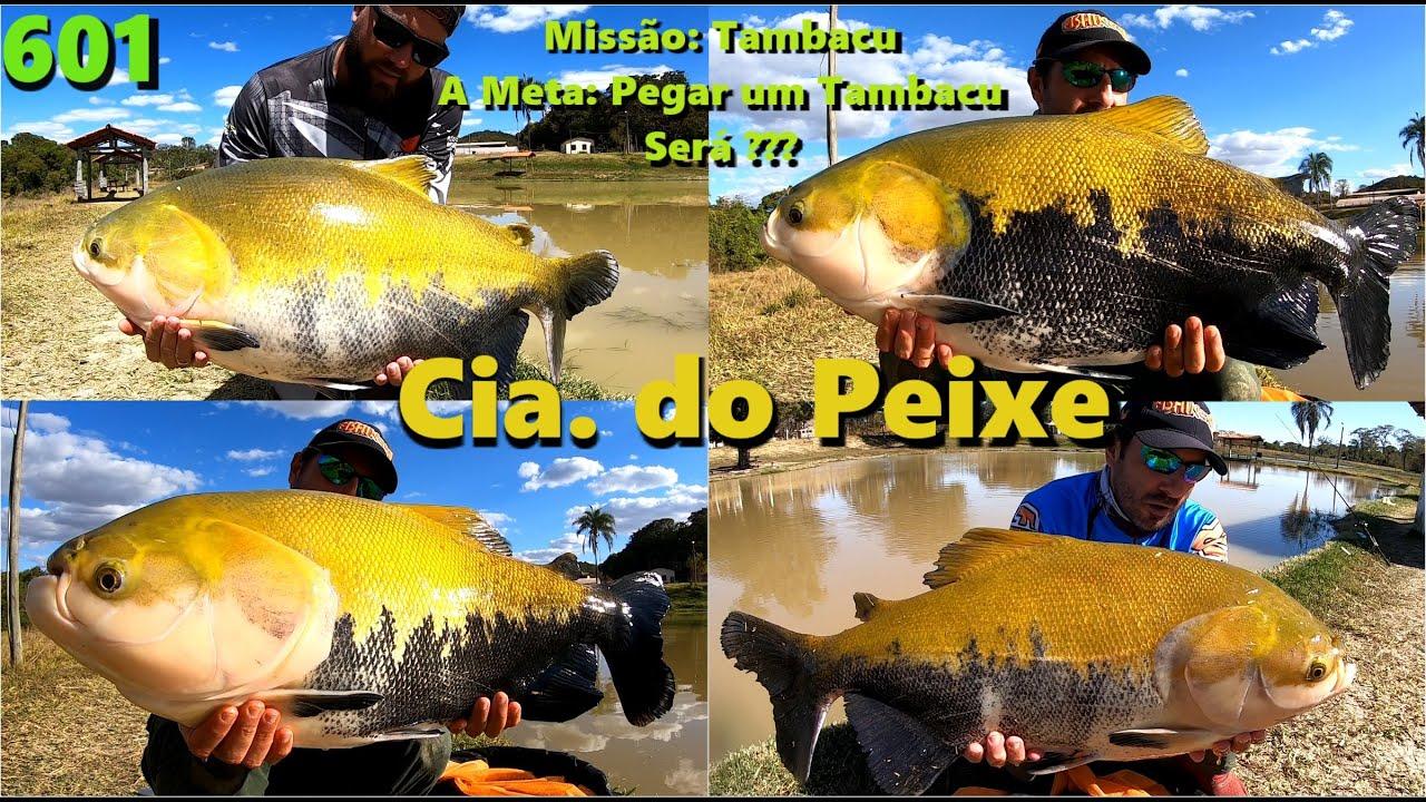 A meta era um Tambacu no meio dos Verdões. Será? Conheça a Cia do Peixe. Programa Fishingtur 601
