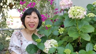 Trồng cây thạch ngọc để diệt cỏ trong vườn (Người Việt ở Mỹ)