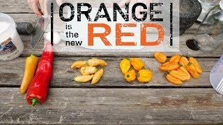 Fermented Hot Sauce: Orange is the new Red