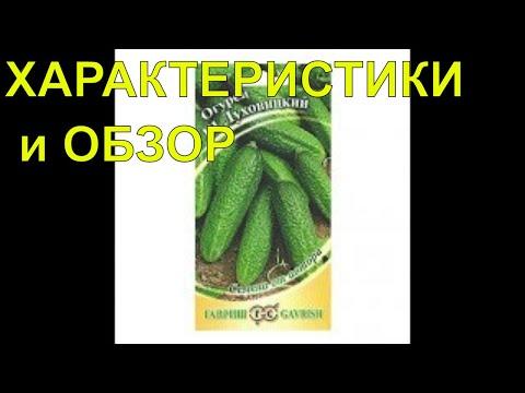 Посев огурцов/Гибрид Луховицкий f1/Обзор и характеристики