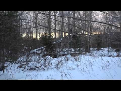 Tracking: Winter Spoor