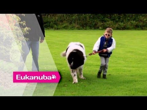 Whizz the Newfoundland helping Children - Part 1   Extraordinary Dogs