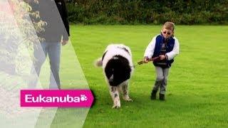 Whizz The Newfoundland Helping Children - Part 1 | Extraordinary Dogs
