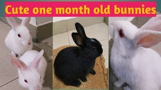 Cute Baby Bunny Never Give up   Funny Rabbits Compilation 2019