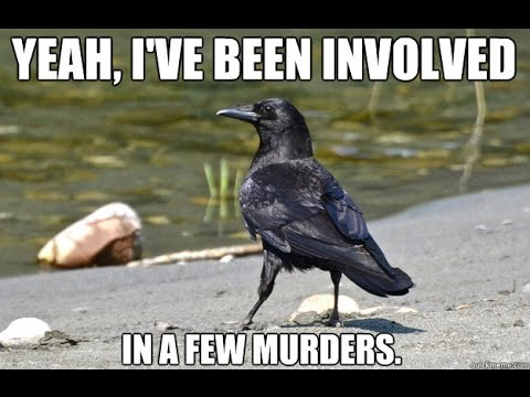 A Murder of Crows: Weird Collective Nouns