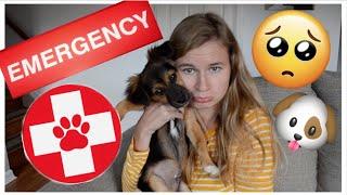 EMERGENCY ANIMAL HOSPITAL VISIT