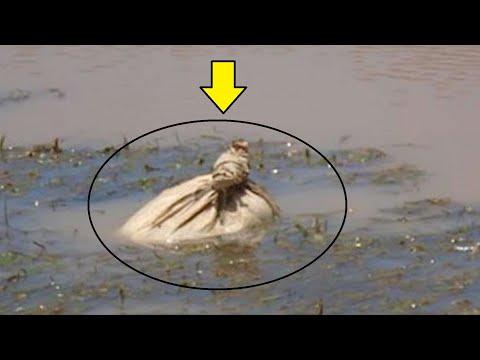 Два гребца увидели плавающий в реке мешок и не смогли поверить своим глазам, когда открыли его