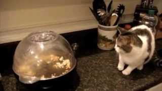 Cat Fail Compilation Funny! - TheYossBoss