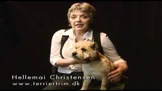 Trim Din Cairn Terrier Med Succes