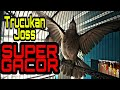 Trucukan Joss Super Gacor Paling Joss Buat Masteran Trucukmu Agar Cepat Gacor  Mp3 - Mp4 Download
