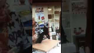 Эксперт издевается над кошкой на выставке