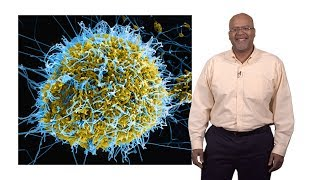 Paul E. Turner (Yale) 1: Introduction to Virus Ecology and Evolution