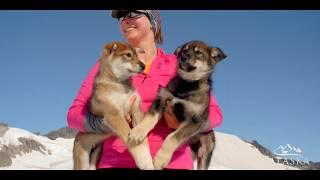 Dog Sledding & Helicopter Adventure