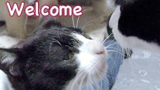 【猫・里親募集】保護猫ケンちゃん♡ニャーンと鳴いて…先住猫と友達になれるの!?【置き去りにされた猫ちゃん18】Cat Video - Feral cat rescue. thumbnail