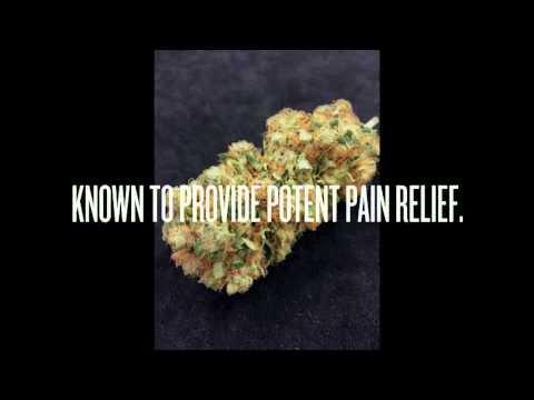 Euphoria Wellness Medical Marijuana - Strain Showcase - Turbo OG