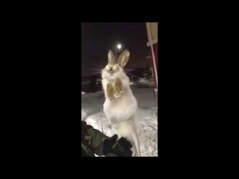 Abnormal frosts in Kazakhstan, animals freeze on the go!!!