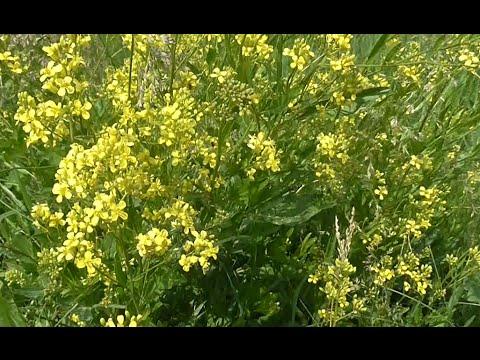 Сбор трав для лечения псориаза травами