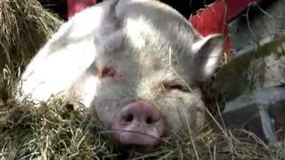 EASY VEGAN - der Film über Veganismus - Dokumentation
