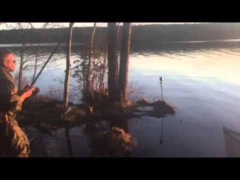 ловля форели в ленинградской области запрещена