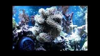 125 Gallon Mixed Reef Aquarium
