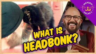 What is HEAD BONK? | Cat Daddy Dictionary