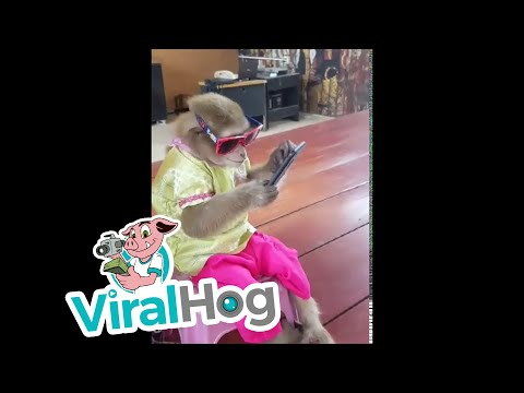TJ, Janet & JRod - Watch This Chill Monkey Playing On An iPhone