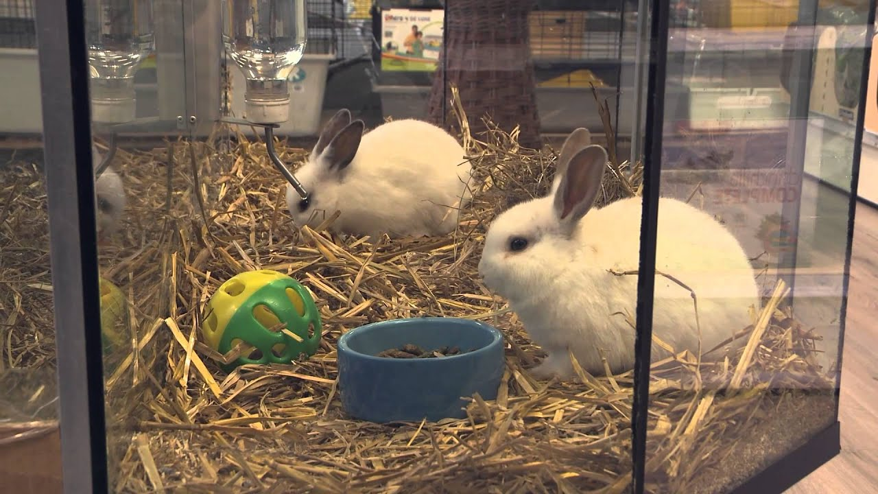 Dierenwinkel andy 39 s dierensuper maarssenbroek regio for Interieur winkel utrecht