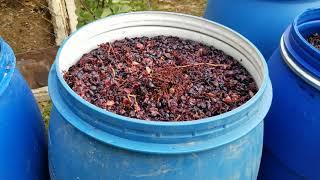 Процесс приготовления Грузинского вина.один из главных моментов...